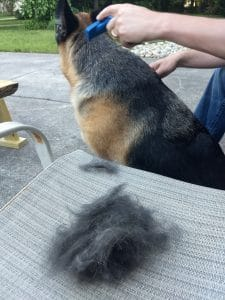The Ultimate German Shepherd Tool – The FURminator